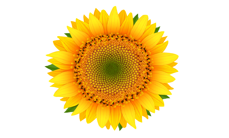 The Blooming Blog: Helianthus