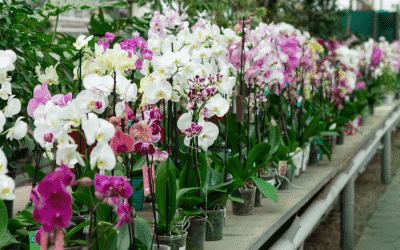The Blooming Blog: Orchids