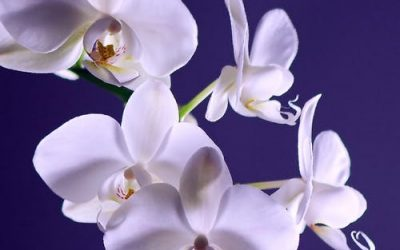 The Blooming Blog: Let's talk orchids