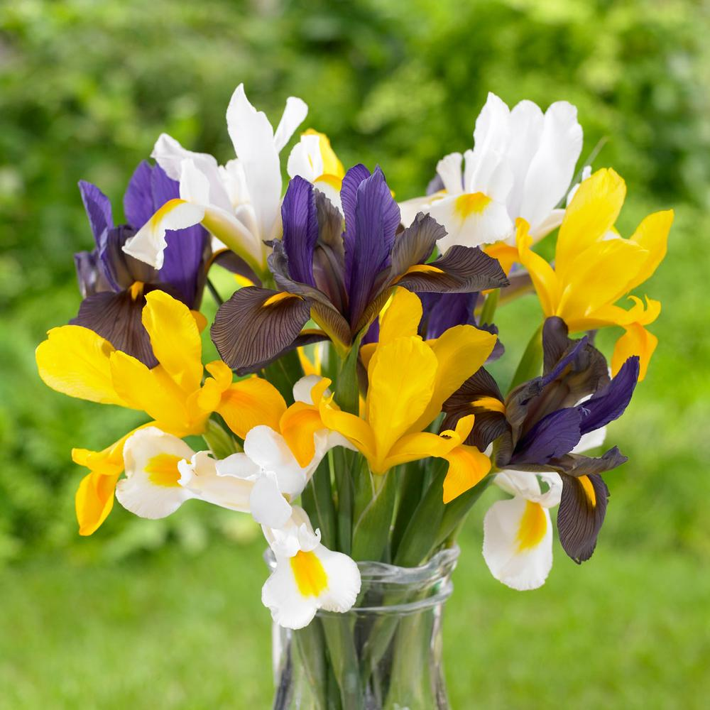 The Blooming Blog:  The Greek Goddess, Iris