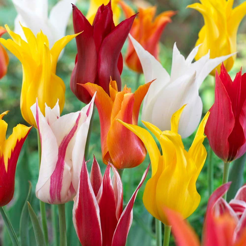 The Blooming Blog: Time for Tulips