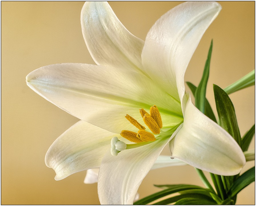 The Blooming Blog:  Easter Flowers