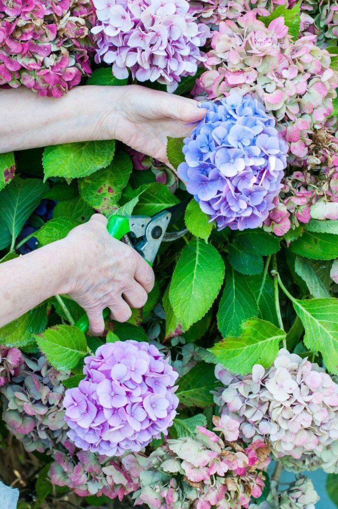 The Blooming Blog:  Heartfelt Hydrangeas