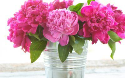 The Blooming Blog:  Wide World of Peonies
